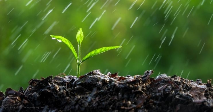 What-causes-smell-after-first-rain